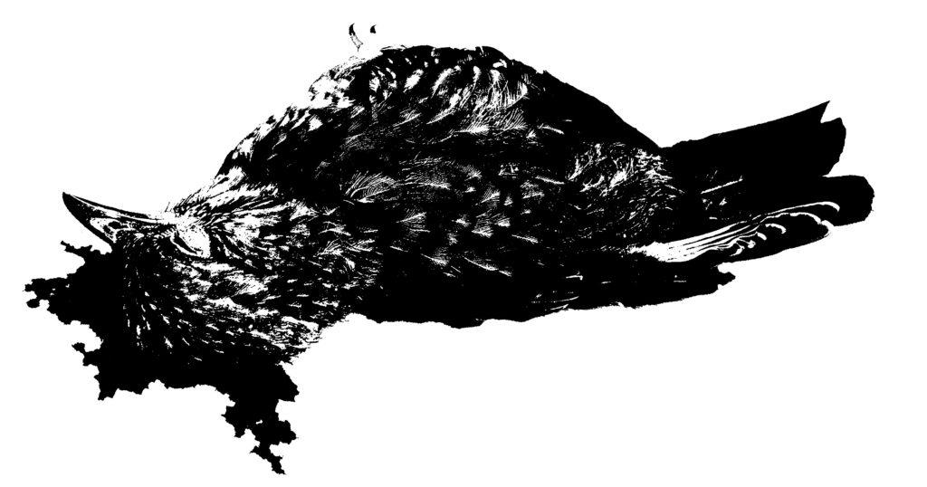 toter-vogel-4